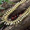 Stylish Designer Mullamottu/Jasmine Chain